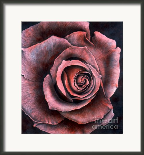 Red Rose Framed Print By Lawrence Supino