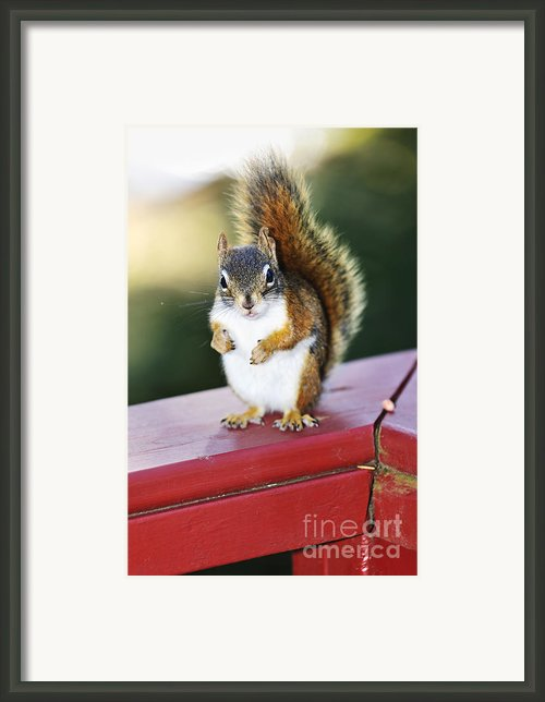 Red Squirrel On Railing Framed Print By Elena Elisseeva