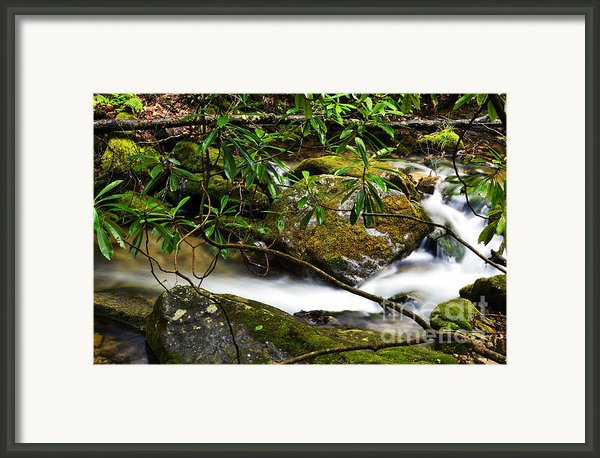 Rhododendron And Waterfall Framed Print By Thomas R Fletcher