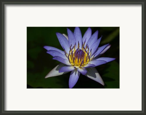 The Element Of Love Framed Print By Sharon Mau