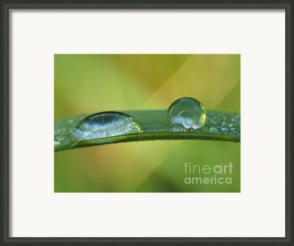 Drops Framed Print By Odon Czintos