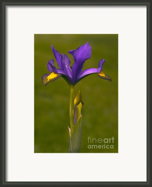 Flower Framed Print By Odon Czintos