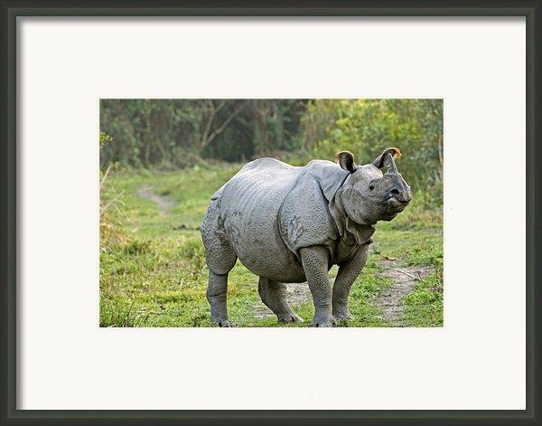 Indian Rhinoceros Framed Print By Tony Camacho