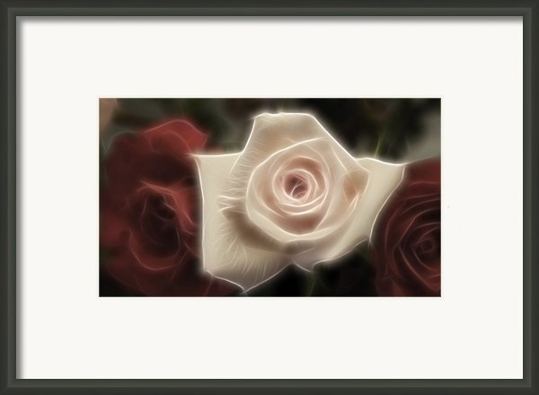 3 Little Roses For Patrice Framed Print By Kevin  Sherf
