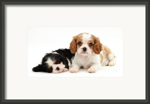 Puppies Framed Print By Jane Burton