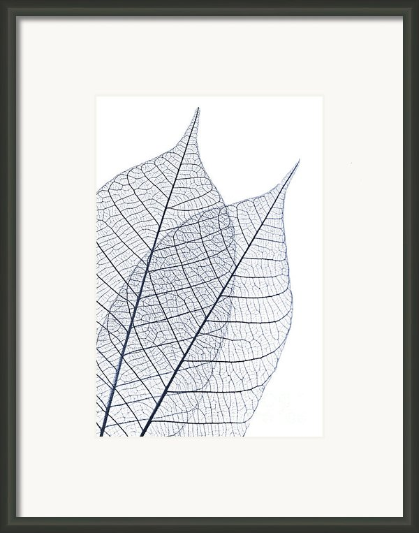 Skeleton Leaves Framed Print By Elena Elisseeva