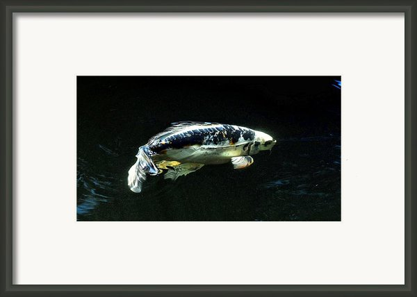 3d Bd Koi Framed Print By Don Mann