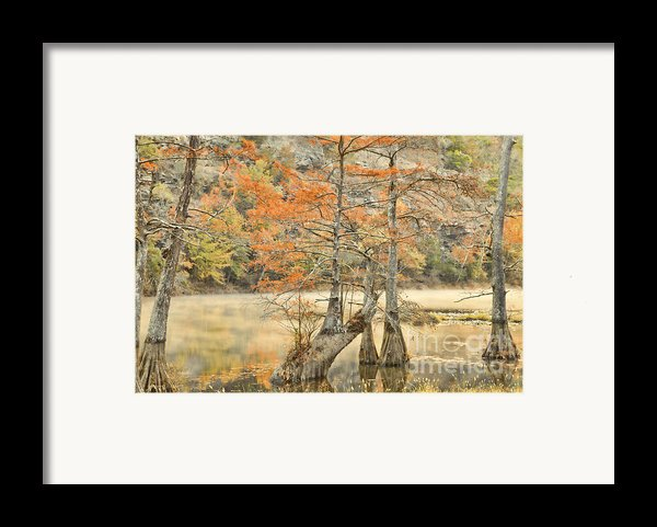 Cypress Trees In The Mist Framed Print By Iris Greenwell