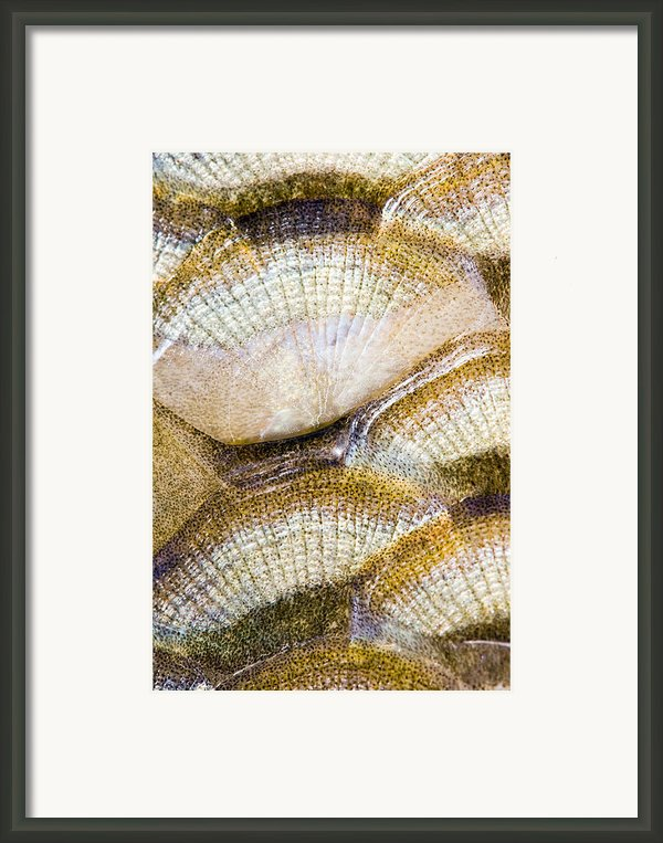 Fish Scales Background Framed Print By Odon Czintos