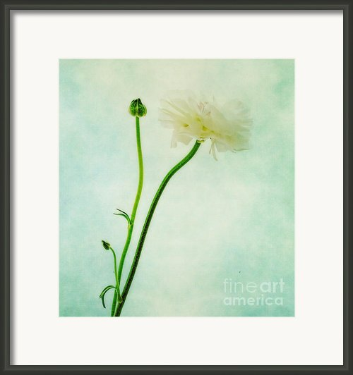 Flower Framed Print By Kristin Kreet