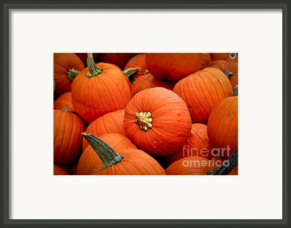 Pumpkins Framed Print By Elena Elisseeva