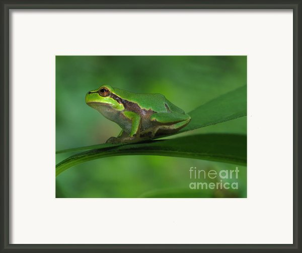 Tree Frog Framed Print By Odon Czintos