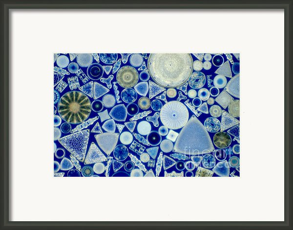 Diatoms Framed Print By M. I. Walker
