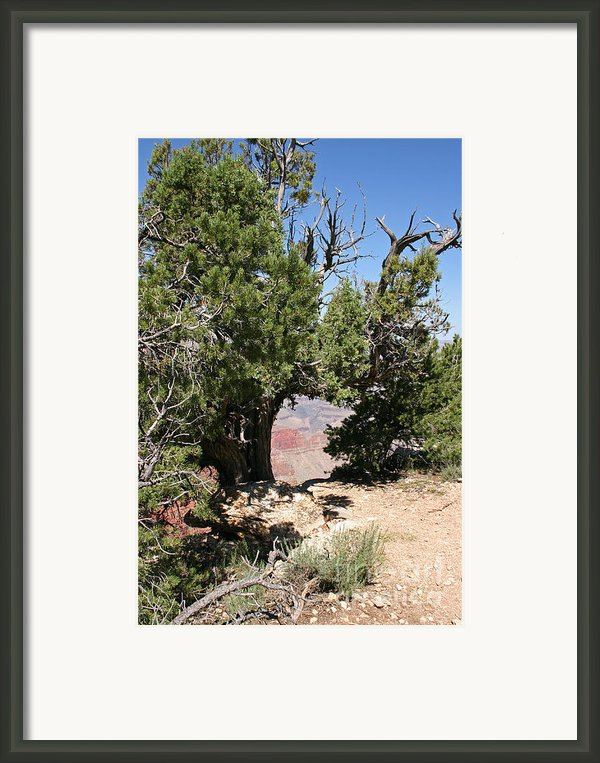 Grand Canyon National Park Usa Arizona Framed Print By Audrey Campion