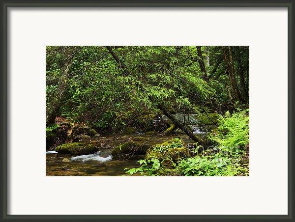 Rushing Mountain Stream Framed Print By Thomas R Fletcher