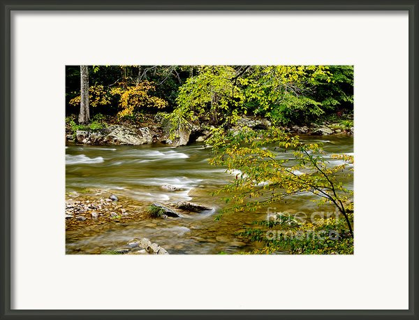 Fall Along Williams River Framed Print By Thomas R Fletcher