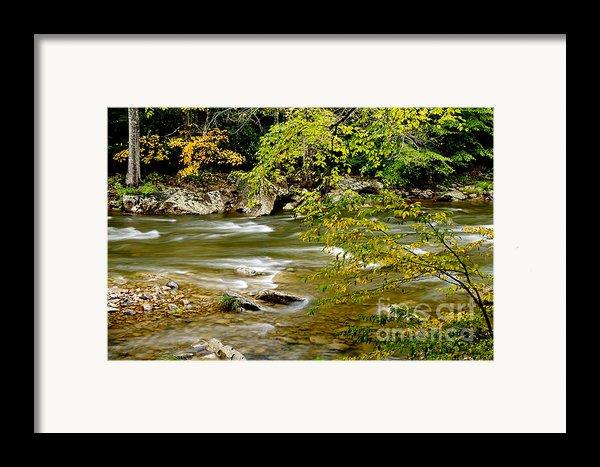 Fall Along Williams River Framed Print By Thomas R Fletcher