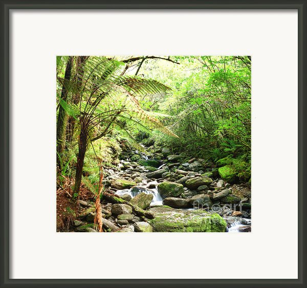 Native Bush Framed Print By Mothaibaphoto Prints