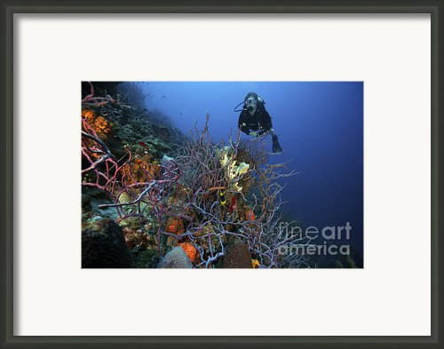 Scuba Diver Swims Underwater Amongst Framed Print By Terry Moore