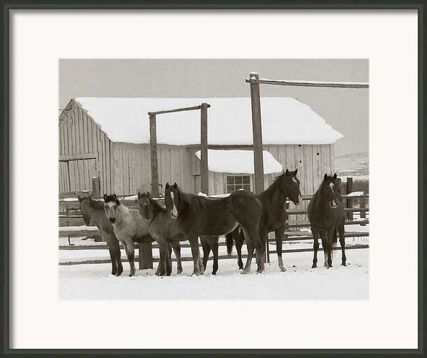 71 Ranch Framed Print By Diane Bohna