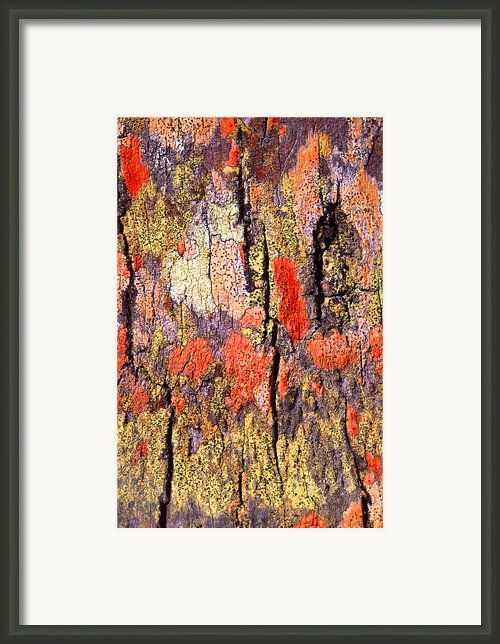 Tree Bark Framed Print By John Foxx