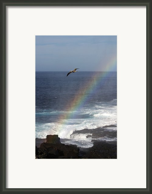 A Blue Footed Booby Soars Framed Print By Ralph Lee Hopkins