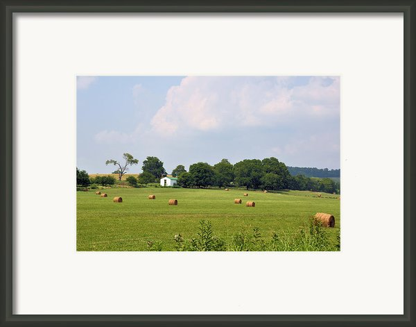 A Breath Of Fresh Air Framed Print By Jan Amiss Photography