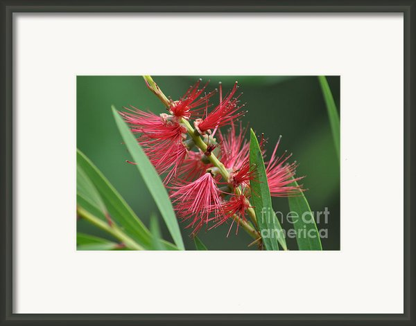 A Brush With Beauty Framed Print By Joanne Kocwin
