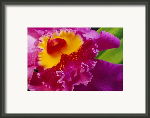 A Close View Of A Bright Pink Cattleya Framed Print By Jonathan Blair