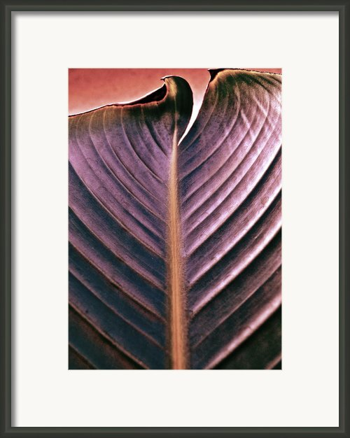 A Cut Above Framed Print By Gwyn Newcombe