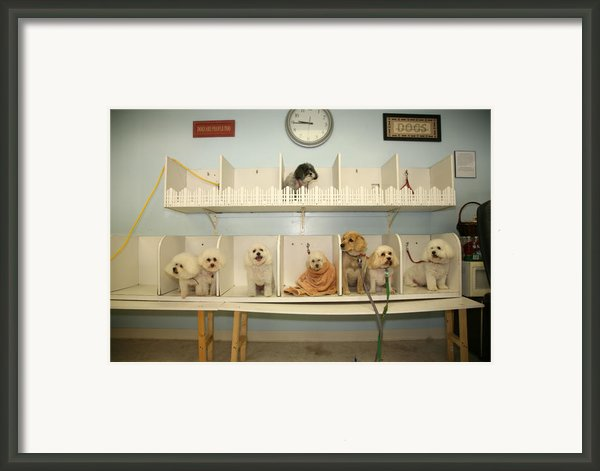A Day At The Doggie Day Spa Framed Print By Michael Ledray