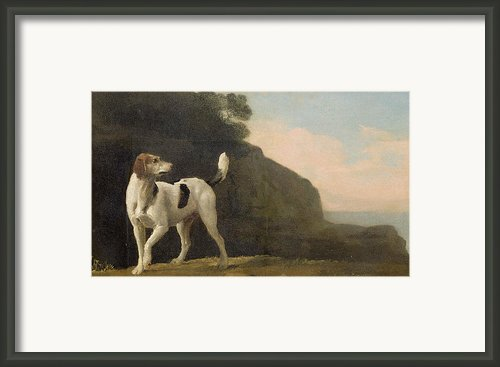 A Foxhound Framed Print By George Stubbs