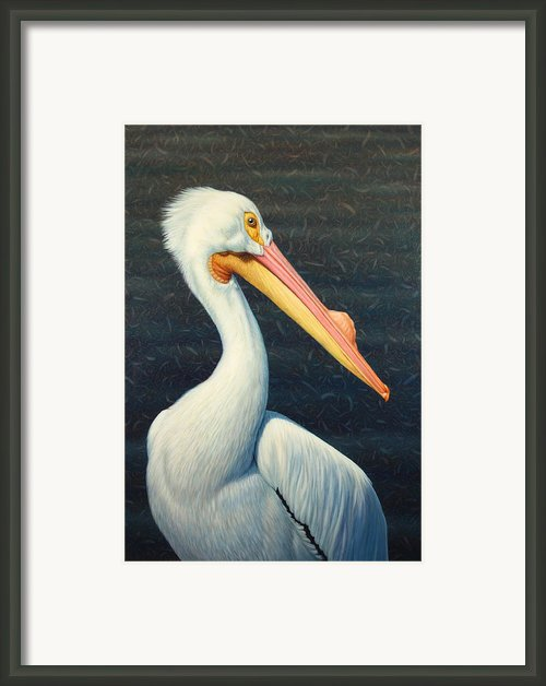 A Great White American Pelican Framed Print By James W Johnson