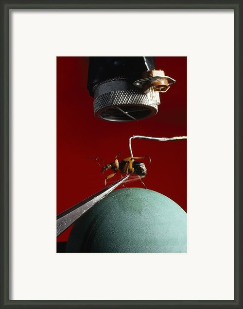 A Microphone Triggers A Flash Framed Print By James P. Blair