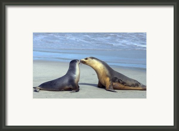 A Mothers Love Framed Print By Mike  Dawson