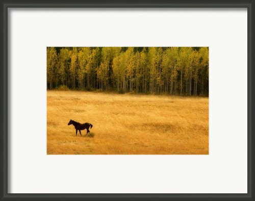 A Nice Autumn Day Framed Print By James Bo Insogna