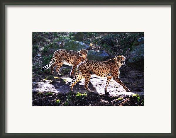 A Pair Of Cheetah