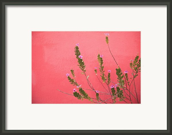 A Pink Flowering Plant Growing Beside A Framed Print By Stuart Westmorland