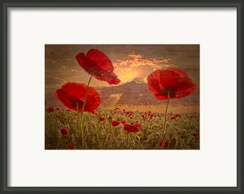 A Poppy Kind Of Morning Framed Print By Debra And Dave Vanderlaan