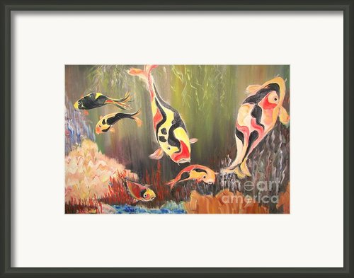 A School Of Koi Framed Print By Rachel Carmichael
