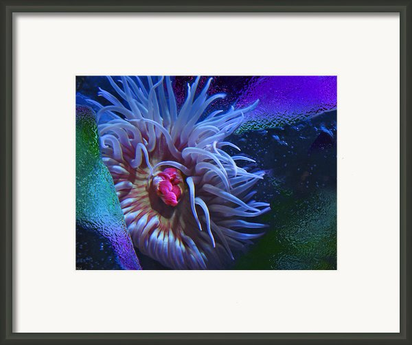 A Sea Anemone Framed Print By Natalya Shvetsky