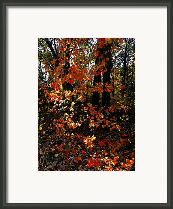 A Slash Of Sunlight Framed Print By Julie Dant