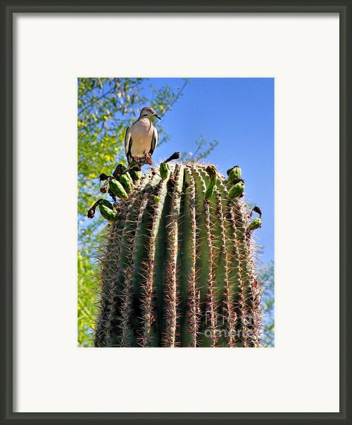 A Spiky Home Framed Print By Christine Till