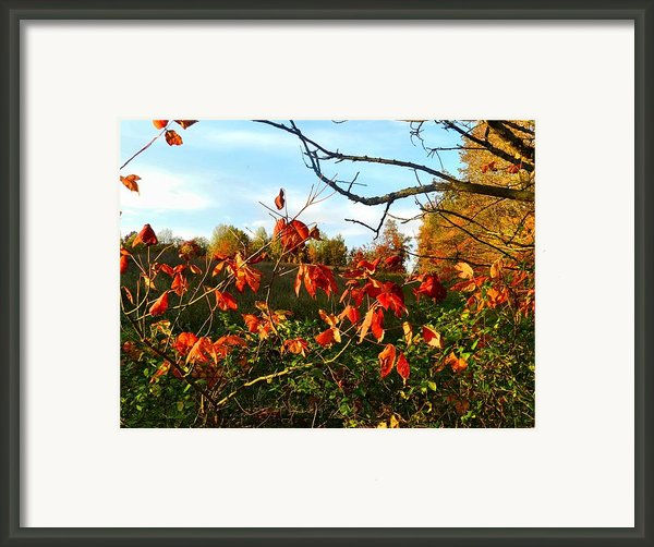 A Splash Of Red Ii Framed Print By Julie Dant