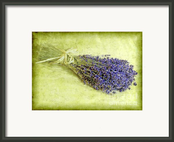 A Spray Of Lavender Framed Print By Judi Bagwell