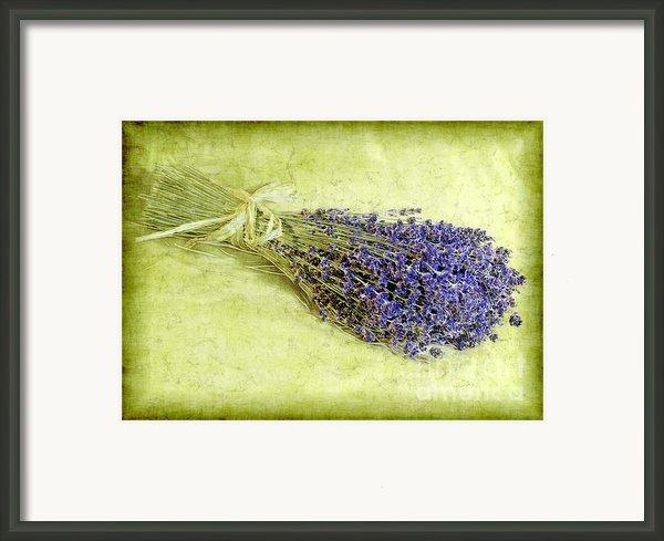 A Spray Of Lavender Framed Print By Judi Bagwell
