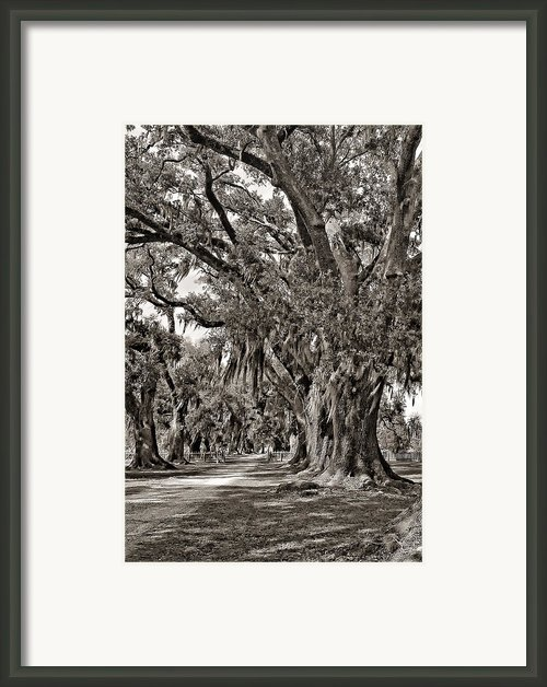 A Stroll Through Time Monochrome Framed Print By Steve Harrington