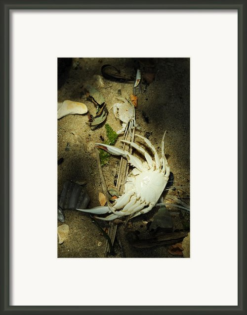 A Time To Shed Framed Print By Rebecca Sherman