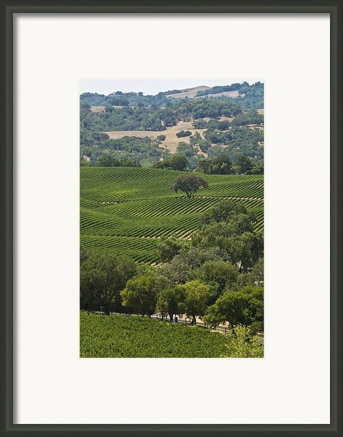 A Vineyard In The Anderson Valley Framed Print By Richard Nowitz