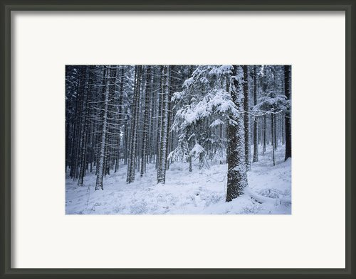 A Winter View Of The Framed Print By Taylor S. Kennedy